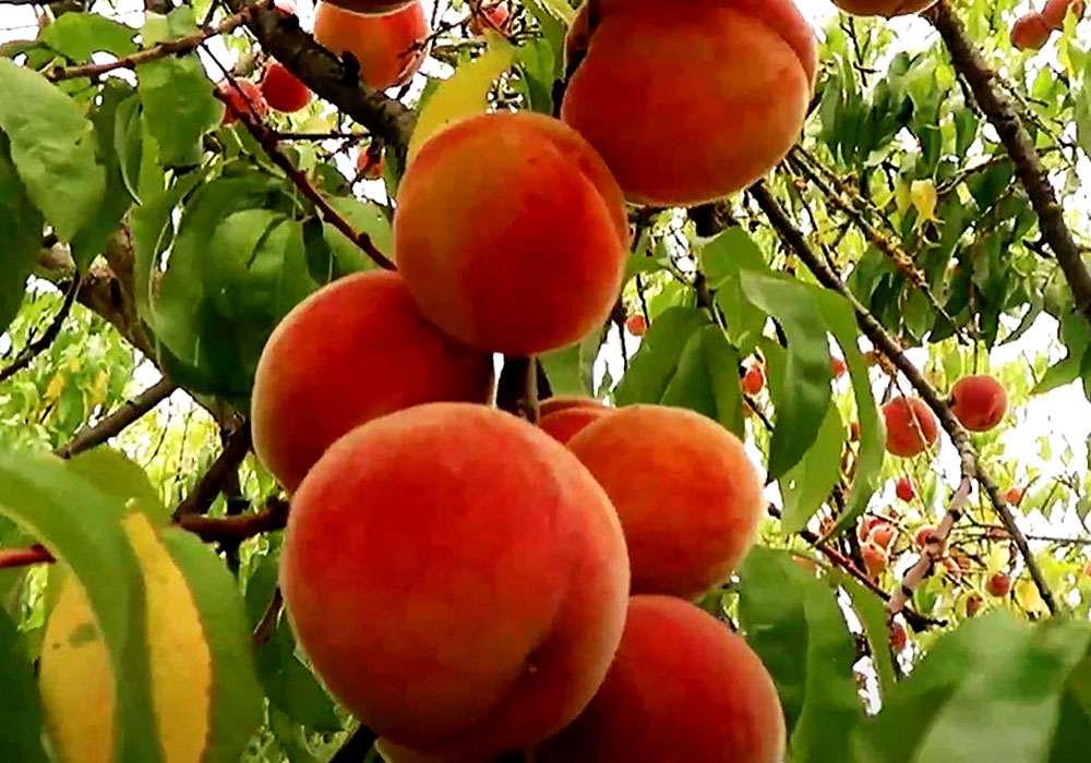 Джем из персиков - пошаговый рецепт, фото 1