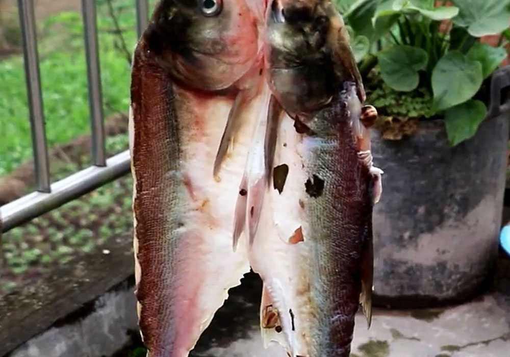 Вяленая рыба - пошаговый рецепт, фото 1